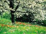 Beautiful-wallpaper-of-flowers