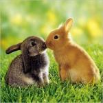 Bunnies-Kiss