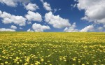 Field-of-Flowers-Nature-Wallpaper
