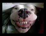 Funny-Dog-Smile