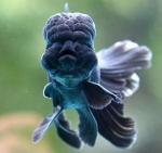 Funny-Fish-1