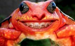 Funny-Frog