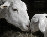 Innocent-mothers-love-picture