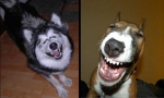 Laughing-Dogs