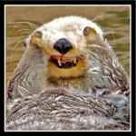 Laughing-Otter