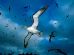 Seagulls -wallpaper 5