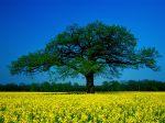 Seasonal Splendor