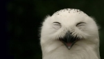 Smiling-Owl