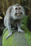 Spider-Monkey-Smile