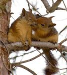 Squirrel-Kiss