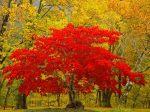 Treasure Tree, Newhalem, Washington