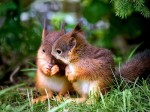 Valentines-Day-Cute-Squirrels