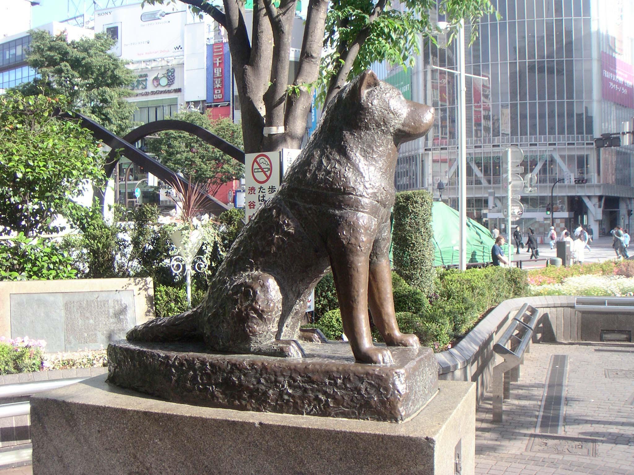 """HACHIKO"""" kisah hidup anjing setia :( – P&P"""